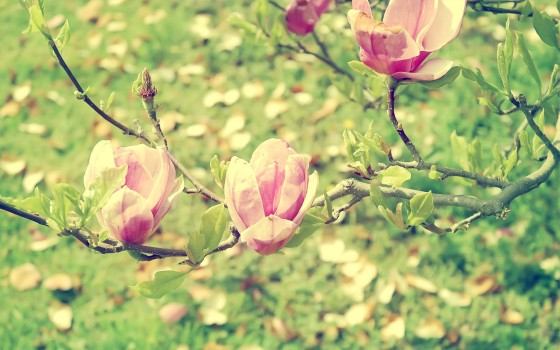 Flowers_Wallpapers_142